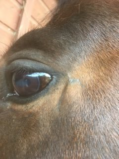 Face wound 3 weeks after initial HoneyHeel application